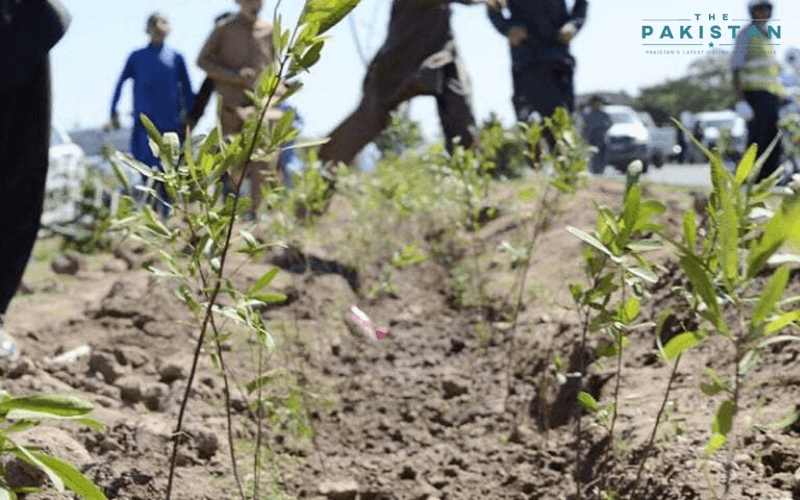 Pakistan to plant 200m saplings in major forest drive