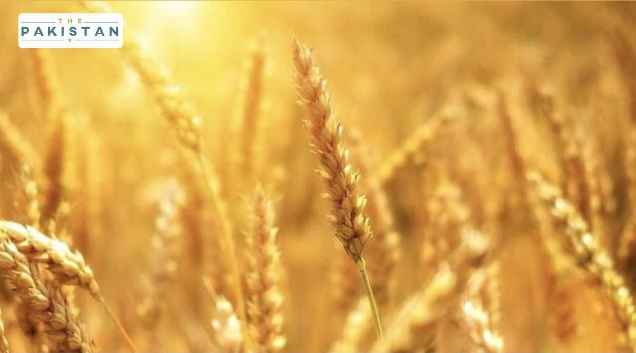 Wheat support price increase; additional imports allowed