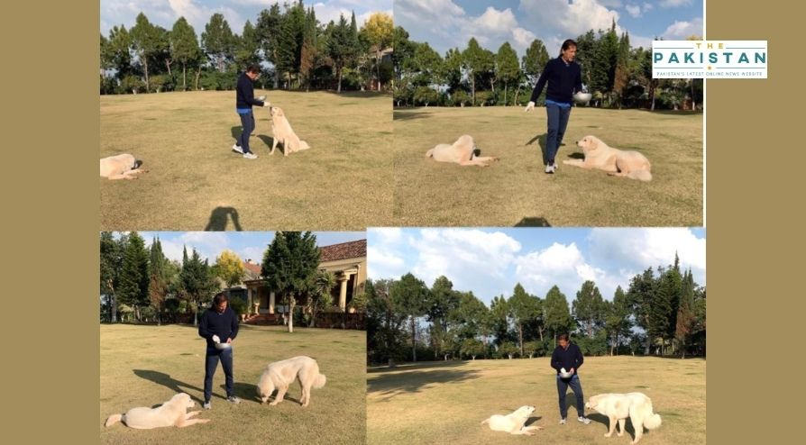 Imran Spends Time With Pet Dogs At Banigala