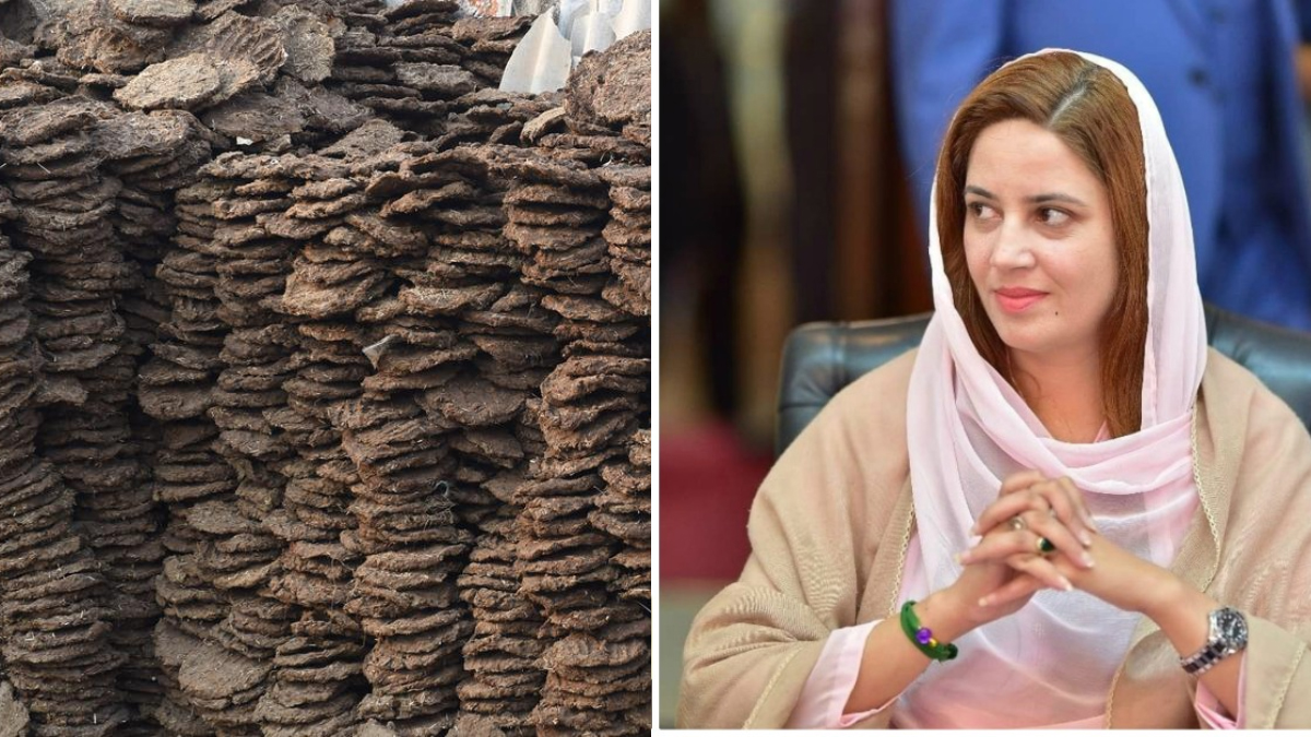zartaj-gul-says-govt-planning-to-generate-energy-from-cow-dung-to-power-karachis-buses